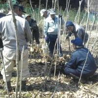 タラの芽栽培講習会