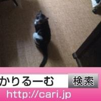2016/09/19(16:52:24)写真 猫S