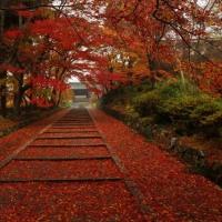 紅葉の色づき比較