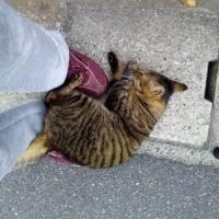 猫散歩・昨日代理店に行って写した写真
