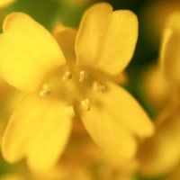 「島オクラ」・「純白ゴーヤー」を蒔種、「鹿ヶ谷南瓜」苗の移植