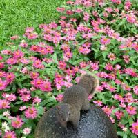 台北の公園で
