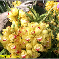 image2290 温室の花1