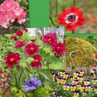 五月の小庭の花・・・