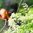 森林の赤い宝石 2