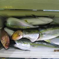 10月13日の釣果と出船の案内