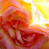 花よ花バラの花