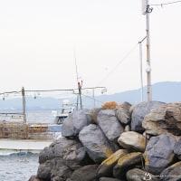 相島の風景とネコたち @相島のネコたち