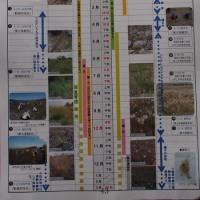 第10回鬼怒川の外来種対策を考える懇談会に参加しました。