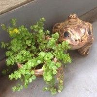ネズ(ミの額)ガーデンのコンセプト