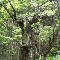 樹木が主役の写真ー20