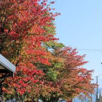 紅葉の季節だね