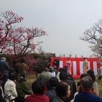 内山邸の梅園茶会