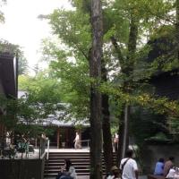 心地良いみどり   木の周りに集まる人々