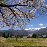 駒ヶ根の春④