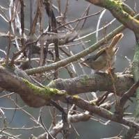 ホーホケキョを聞きながら厚木・自然観察公園を散策