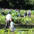 花園ハス祭り 観蓮会(平成29年度)