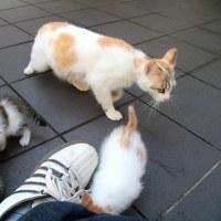 梅雨真っ最中の沖縄の猫たち 2016年5月 その35