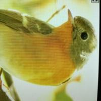 台湾野鳥撮影旅の7日目
