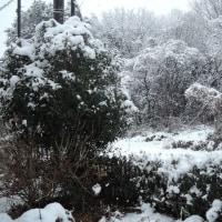 茨城から発信します 水戸市は初雪・大雪でした