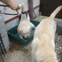 フリスビーを立てる犬