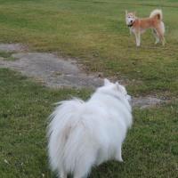 秋の犬まみれ公園