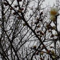 なめこ、シイタケの原木栽培に挑戦