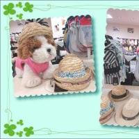 春夏DOG WEAR☆第2弾♪