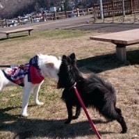 午後のお散歩『旭山記念公園』