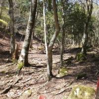 世界遺産大峯奥駆道を歩く  桜満開の前鬼から釈迦ヶ岳へ  2017年4月30日  その1