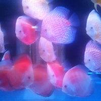 無料で入れる水族館