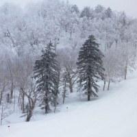 また冬に戻った富良野スキー場:4月20日2017
