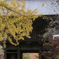 久々、秋の九品仏。