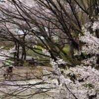 花の上州路の旅~水沢観音・伊香保グリーン牧場