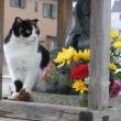 猫と弁天像