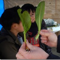 ▲雪の中、今日の土曜教室は「郷土野菜ともちつき」