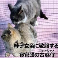 衣笠丼弁当/女帝