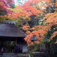 京都の紅葉と大混雑  その 2