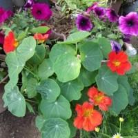 手がかからない庭の花