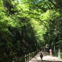 ビーバー隊 4月 隊集会 箕面ハイキング‼︎
