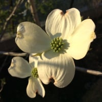 心地良いみどり    白い花 大集合!