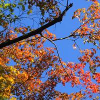 昨日の高桐院の紅葉