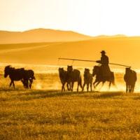 モンゴル撮影といえばきゃらばん写真倶楽部