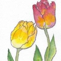 子供の頃って、花はみんなチューリップでした