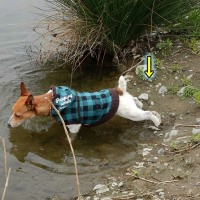 寒中水泳をしそびれた男!