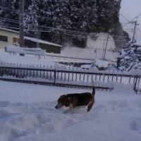 雪・・・です