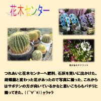 鮮やかな花・ 珍しい花
