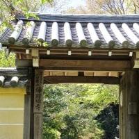 新緑には朱色の塔がお似合いです!・・・岩船寺 浄瑠璃寺