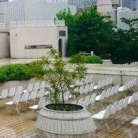 岩合光昭写真展「ねこの京都」