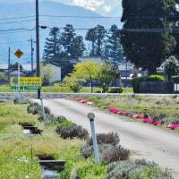 花の季節の喜び、町角の花、通りの花、セキレイ(3)・・・立山町